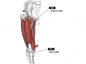 筋肉名称を覚えよう筋肉名称筋肉名前筋肉図イラスト 厳選され