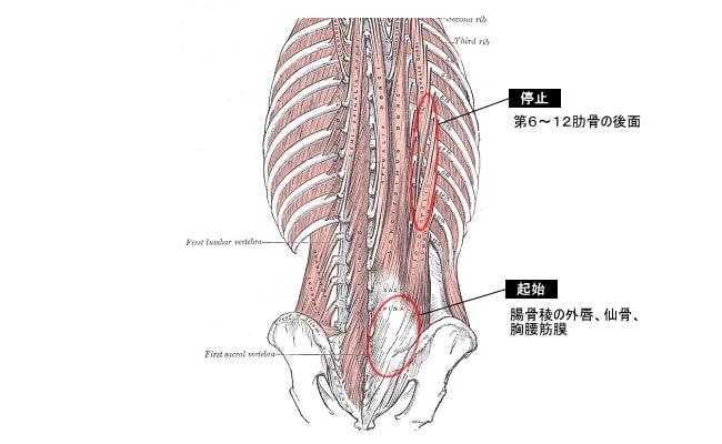 腰痛など慢性的な痛みの治療「トリガー ...