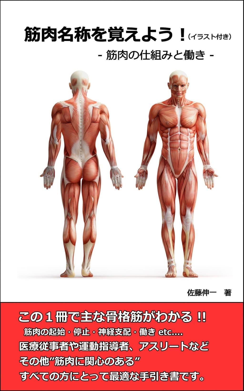 筋肉名称を覚えよう!|筋肉名称...
