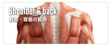 筋肉名称を覚えよう 厳選された筋肉をご紹介します